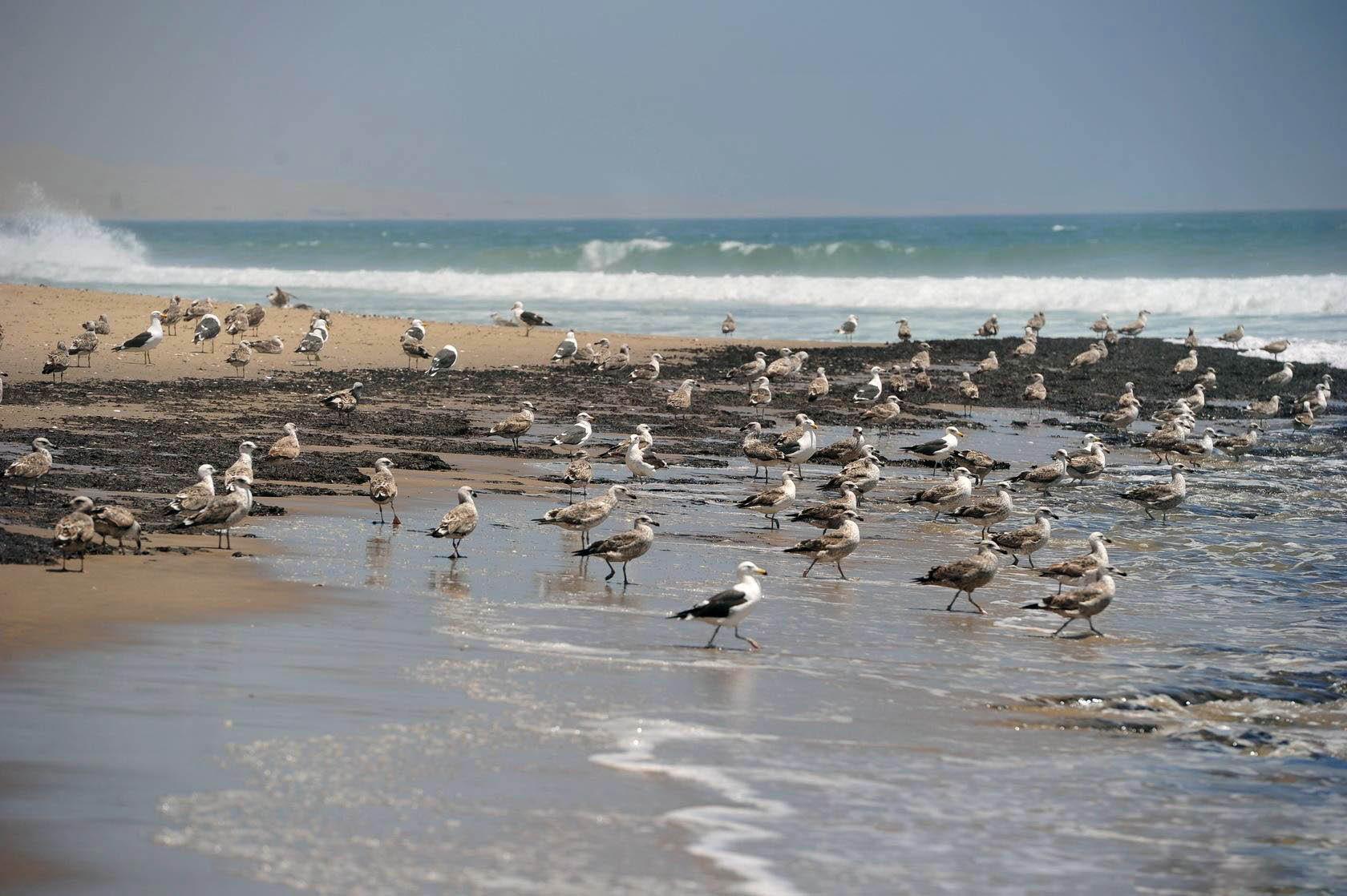 非洲经常闹饥荒,靠近海边的人就是不吃海鲜?