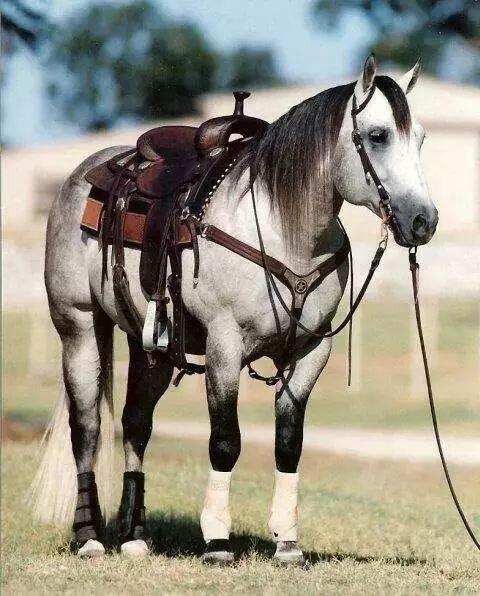 马与人性交视频_几个视频拍摄技巧帮你快速卖马