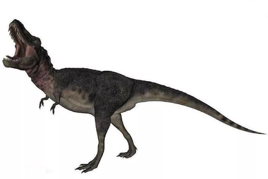 话说霸王龙有个远亲,生存于晚白垩纪的亚洲的蒙古和中国——特暴龙