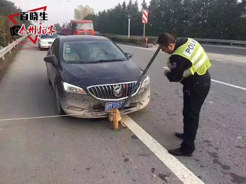 操屄囌M_泰州的最牛视频:一辆苏m别克车撞上小狗,狗没事,车坏了