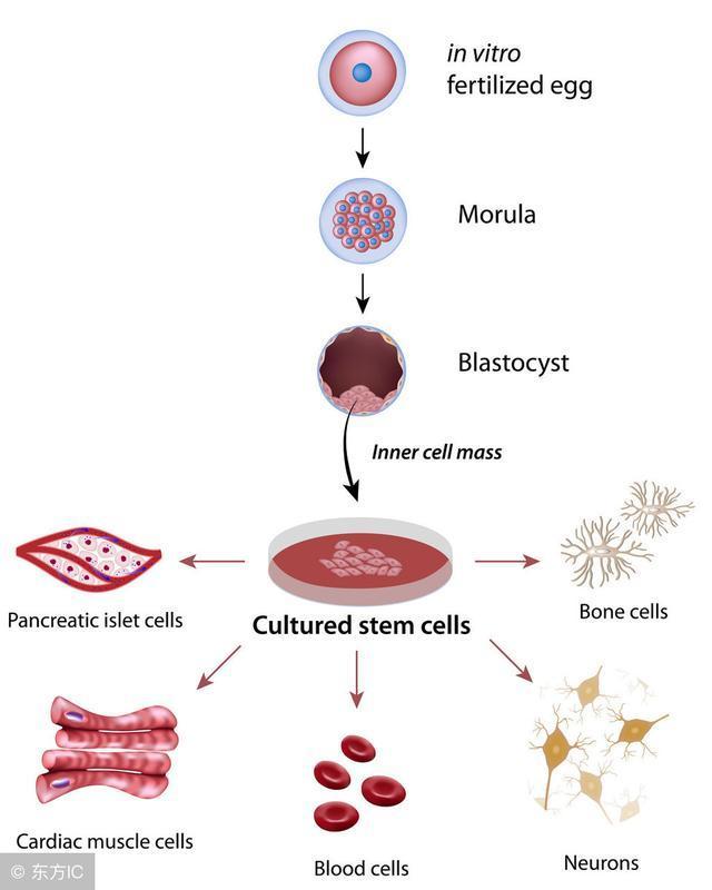 《Nature》:清理間充質干細胞MSCs亂象