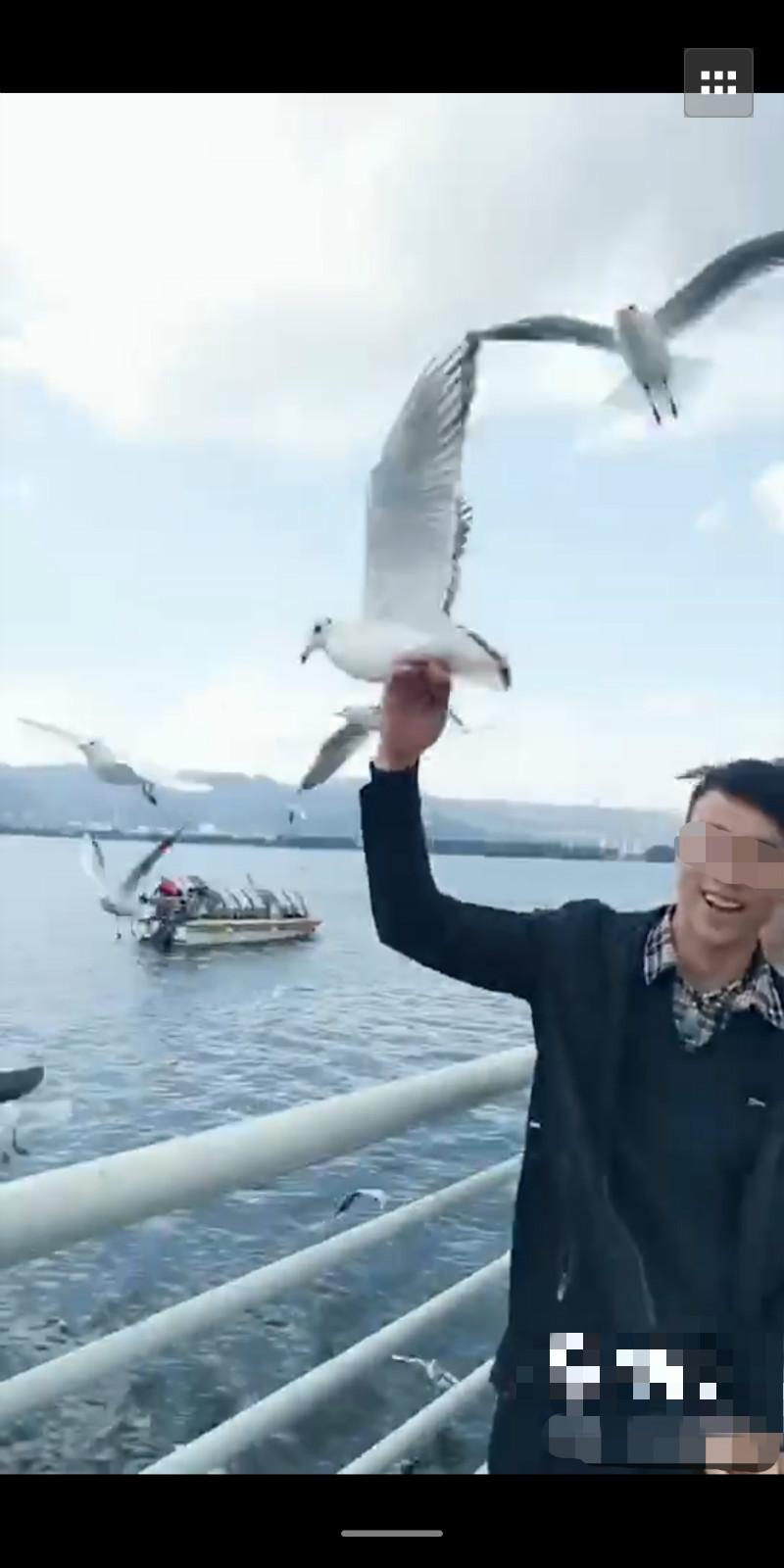 """云南一男子抓红嘴鸥""""涨粉""""被罚款3000元"""