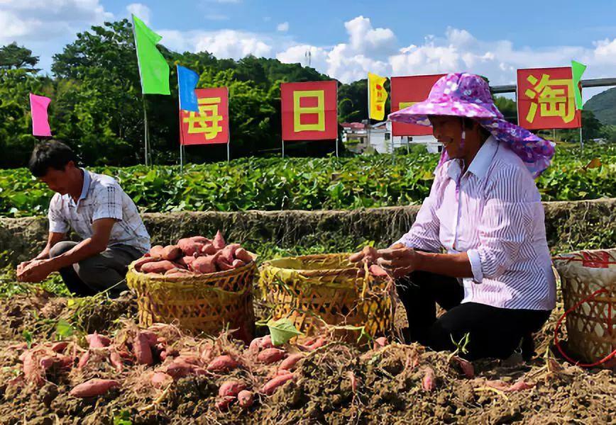 逆向赋能供应端,每日一淘打造新型农业产业链