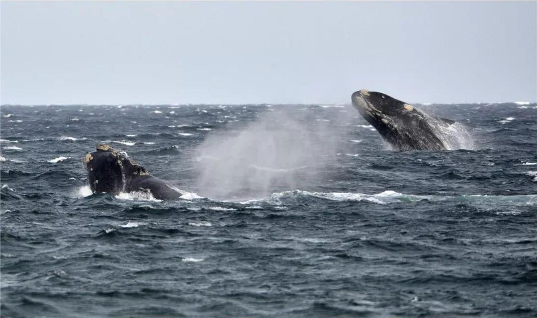 为保护濒危鲸鱼决定减少声纳训练少玩图片