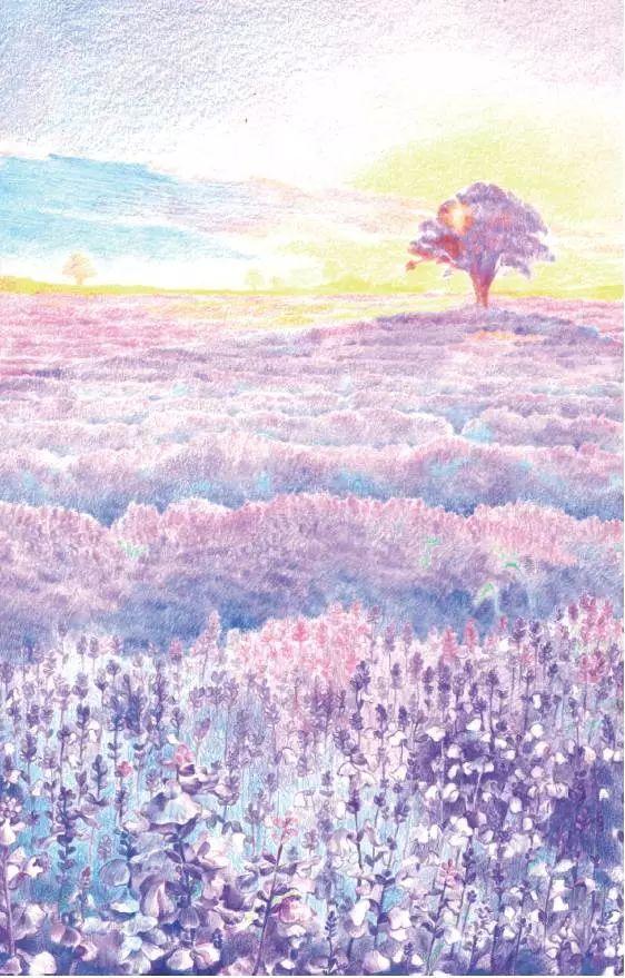 是世界閭名的薰衣草故鄉 今天分享一個彩鉛繪畫教程 繪畫這個美麗的