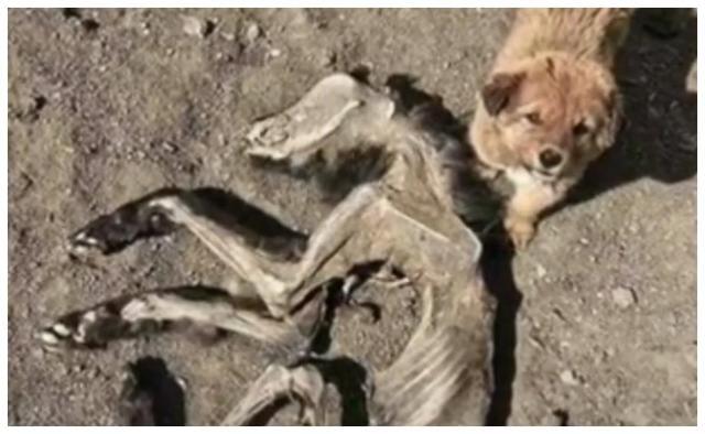 女子登山路边发现流浪狗,想把它带回家,狗狗却带他去了一个地方