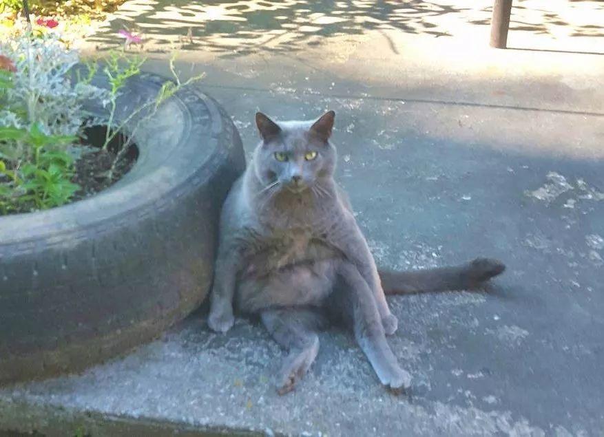 妹子打听完猫咪的背景 确认不是变态后 展开每天喂猫的活动图片