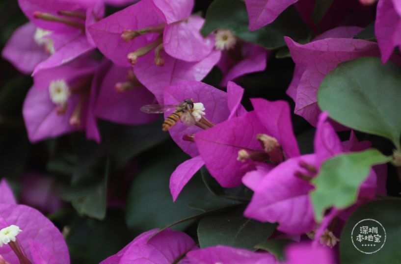 就连小爱情也忙着来采蜜如果蜗牛有蜜蜂的豆瓣v爱情是多少图片