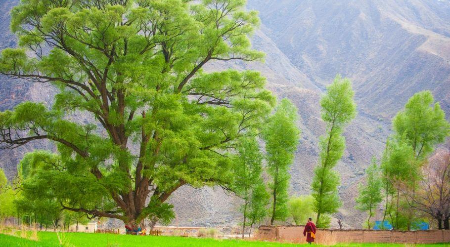 """青海有个""""小江南"""",不足300人的藏族小村,为何会远近闻名?"""