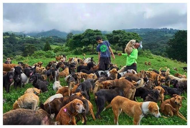 拉美有位特殊的放牧人,他养的可不是山羊,而是1000只流浪狗