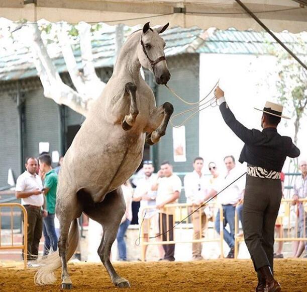拉莫斯和赛马合影马的私处悬在他头顶