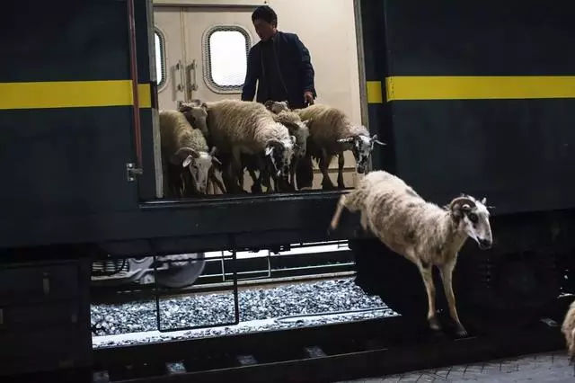 """23年不涨价的火车,票价仅需2元,母猪也能乘坐去""""赶集""""的火车"""