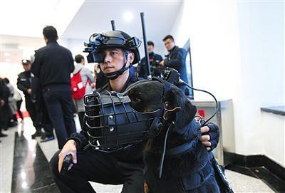 130余警犬来京比武 佩戴犬用战术头盔