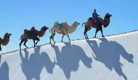 相约新疆看雪  雪后的新疆沙漠美爆啦!