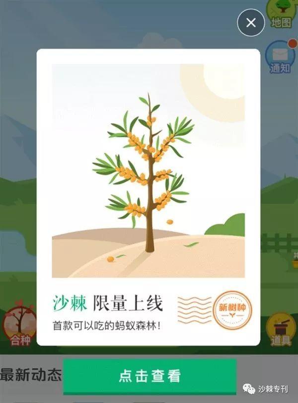 【特大喜讯】沙棘上线支付宝蚂蚁森林图片