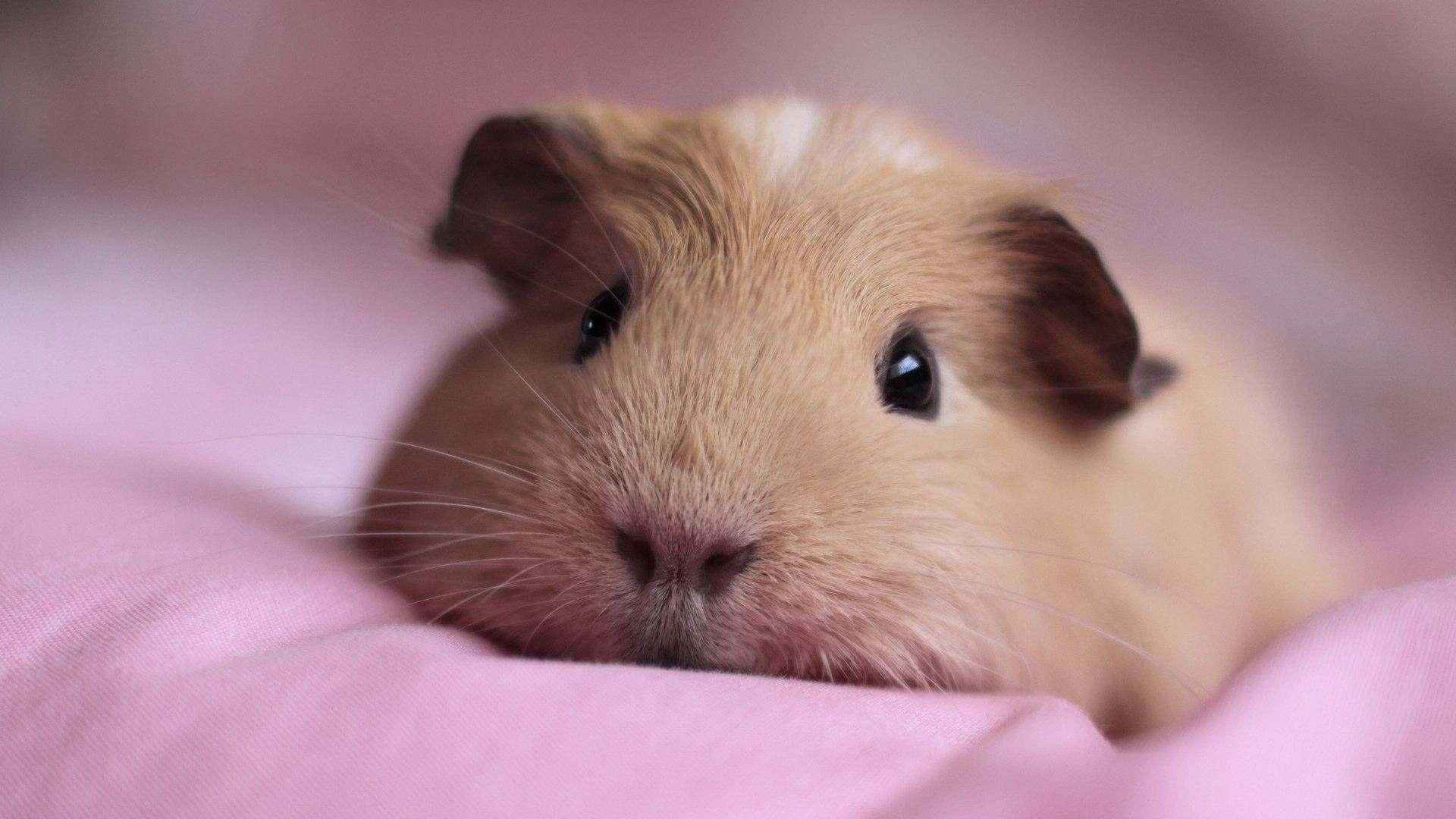 我们常用哪种动物来形容吝啬小气,一毛不拔的人?