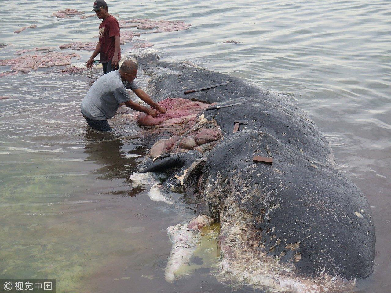 尸体解泡�_5米长的抹香鲸尸体被发现.