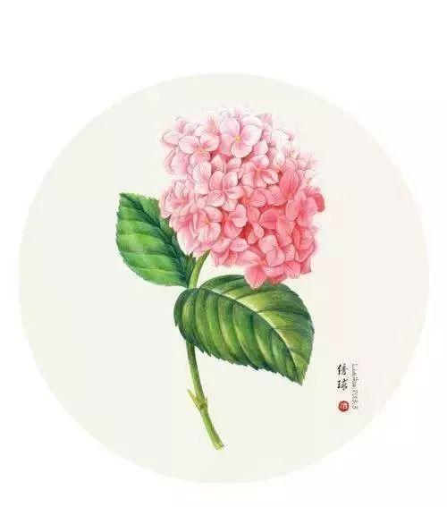 彩铅课程314|唯美逼真彩铅手绘花朵插画
