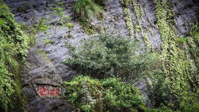 """中國最""""嬌貴""""的三棵古樹,警衛員24小時伺候,一棵投保1億"""
