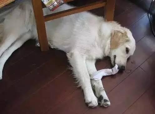 一条引人深思的话题:狗狗白天自己在家都吃了啥?