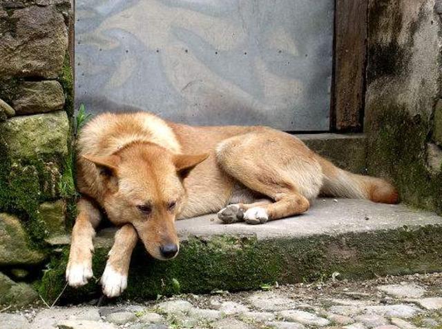 辦完老父親的後事,兒女鎖了舊屋,卻發現狗朝著床底下不停地叫