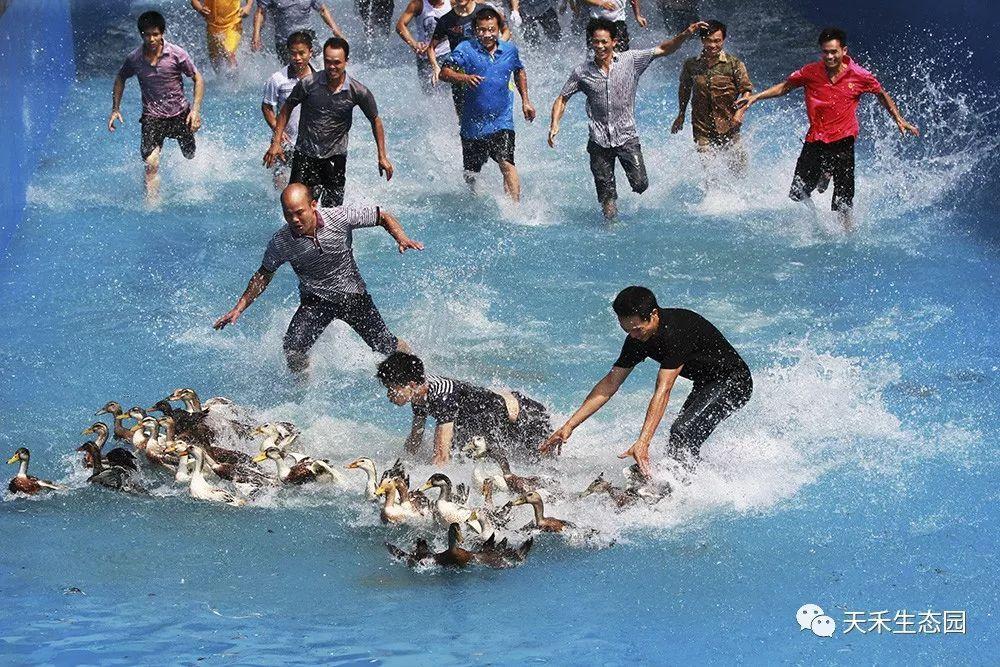 天禾庄园户外活动全新升级,抓鸡,抓鸭,抓鱼等十大趣味