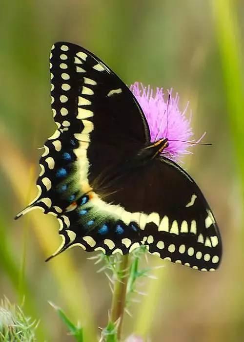 国画图文教程:画蝴蝶,这里有最全的素材