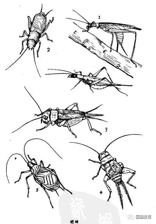 国画图文教程:全网最全的昆虫白描图谱