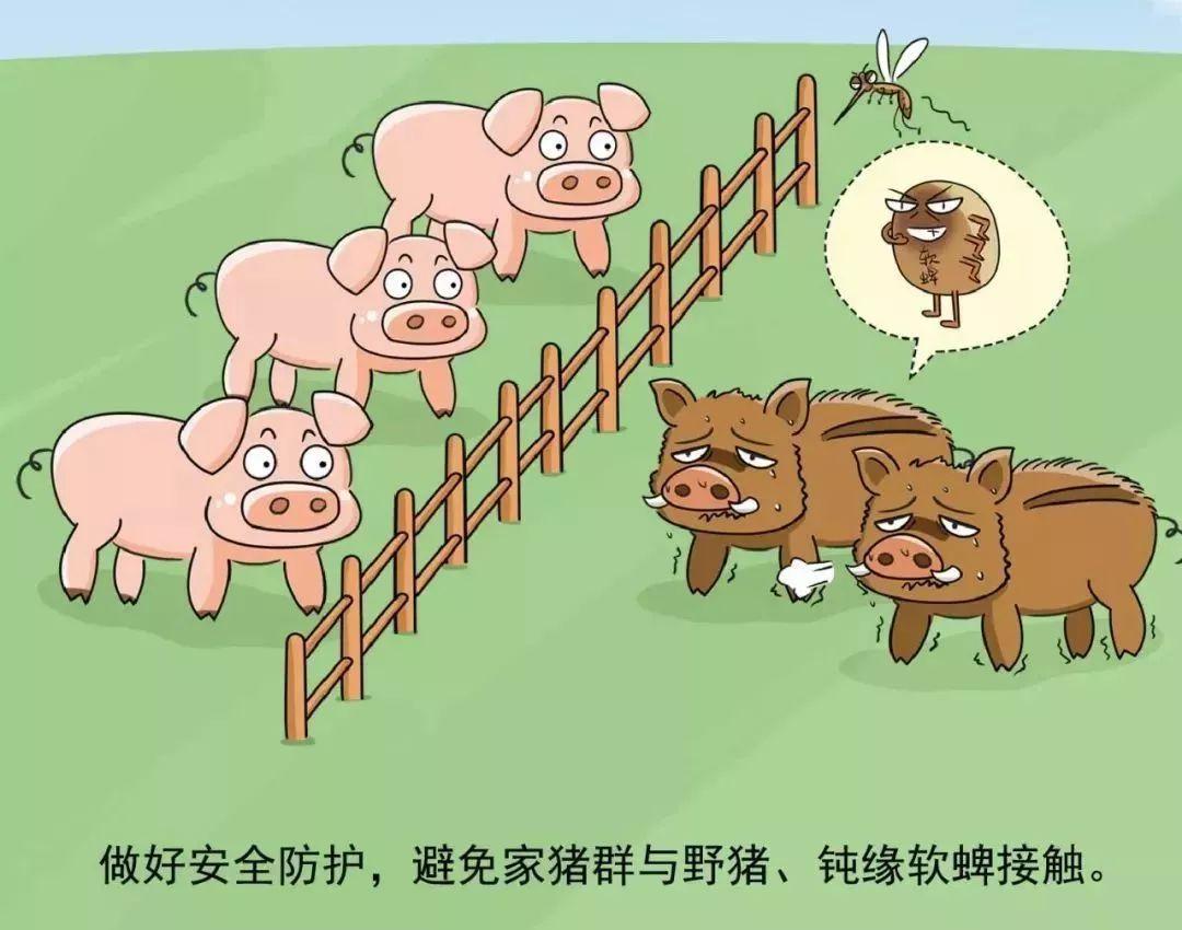 到饭点了 伴随一声哨响猪群狂奔下山吃饭 网友:像极了自己的样子
