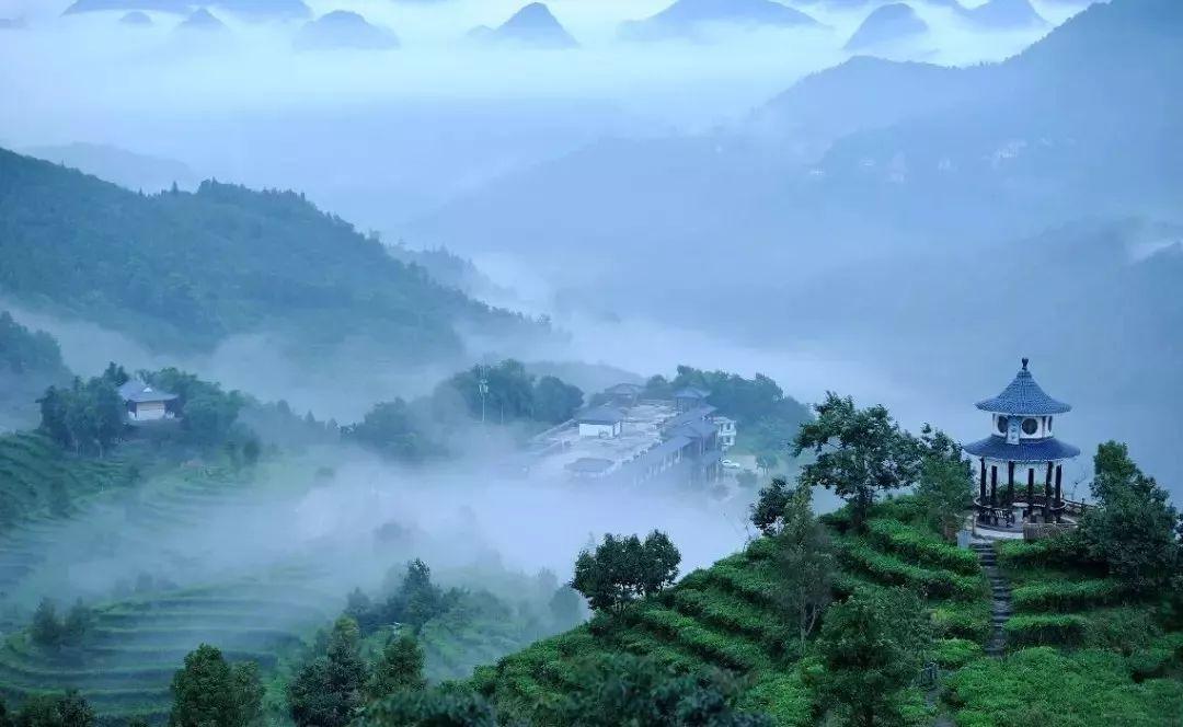 凌云茶山 凌云位于广西西北部,是广西茶叶第一大县,中国名茶之乡