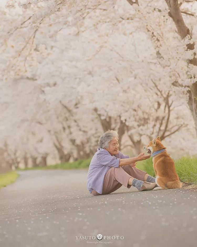 日本摄影师YASUTO:老奶奶和柴柴