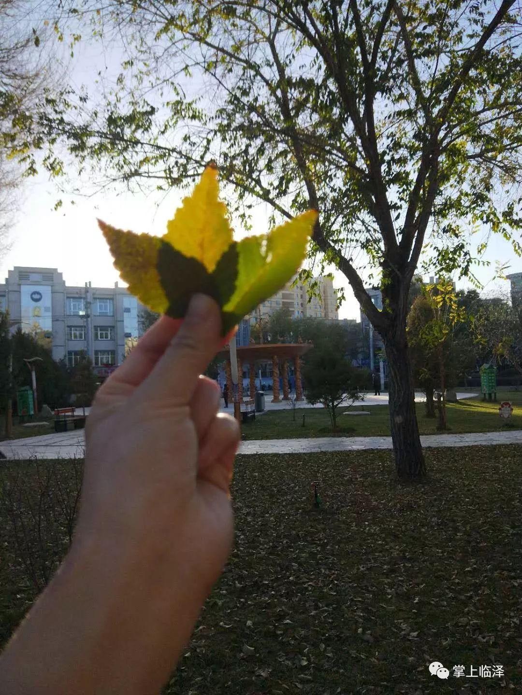 【行摄临泽第二期】秋日风景