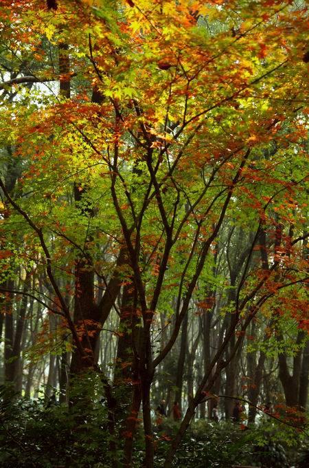 知否 知否?东湖磨山正是红肥绿瘦!如油画般加持的美惊艳你的眼!_色彩