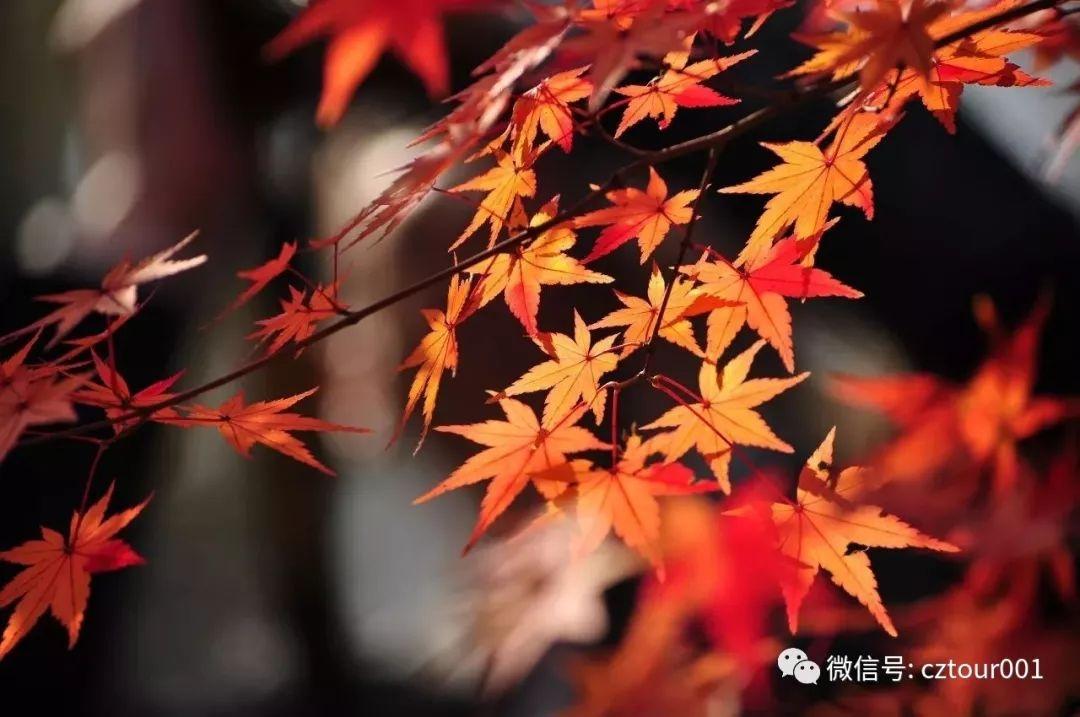 太湖鼋头渚风景区中有一条醉人的花树之路,这就是秀色可餐的十里芳径