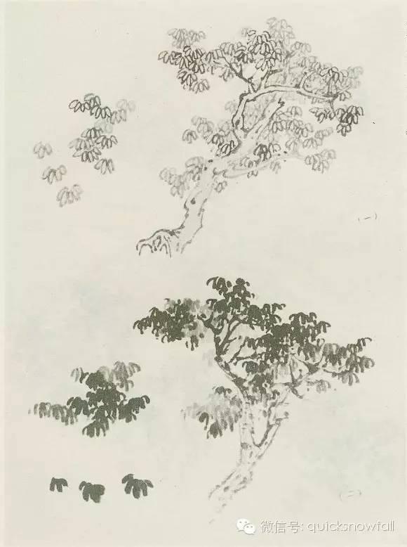 梅花树手绘画法