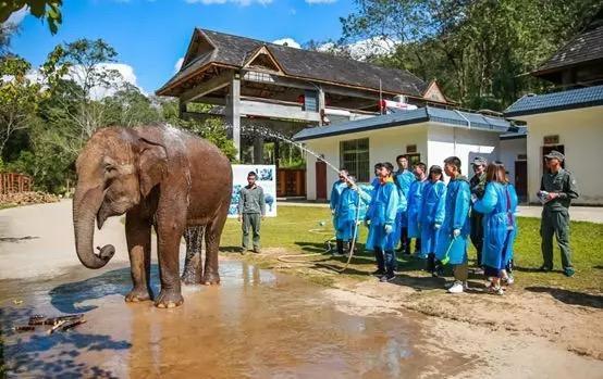 携手公益组织,英孚青少儿英语全国招募亚洲象保育志愿者