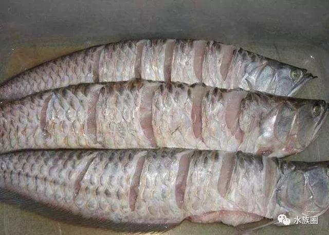 在中国其实也有当作食用鱼卖的,就是价格相当贵,你吃过吗?