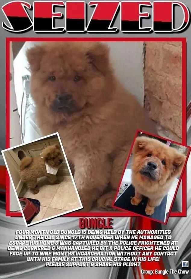 咬警察的松狮犬Bungle,被判9个月监禁