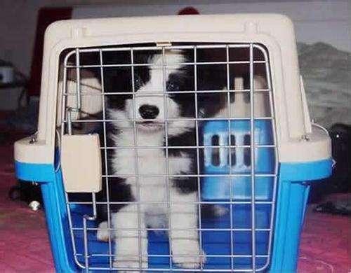 从国外带宠物回国需要注意...