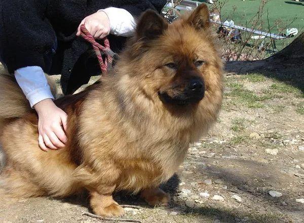 不同品种狗狗生的混血狗狗