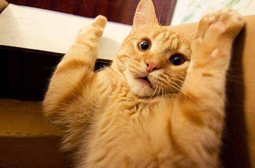 猫咪做错事了它知道吗图片