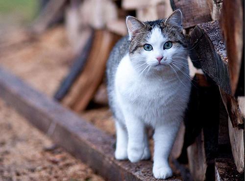 猫咪做错事怎么教图片