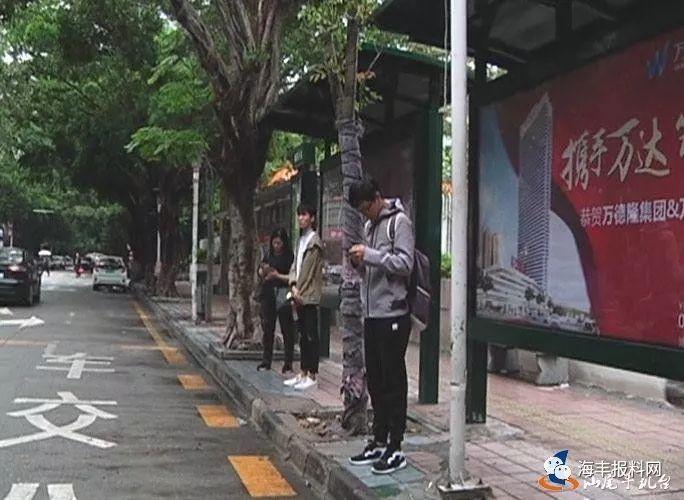 【滚动】汕尾市区公交亭前种树,市民意见不一!