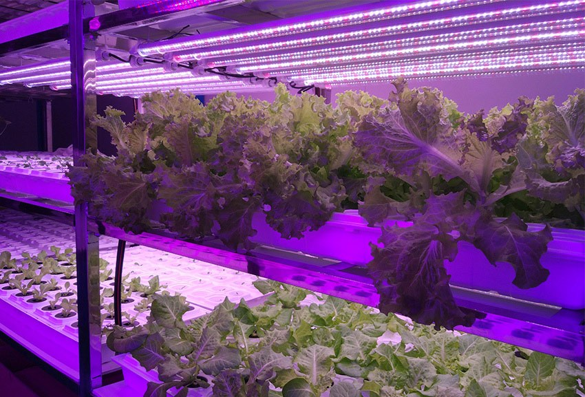 植物光照灯
