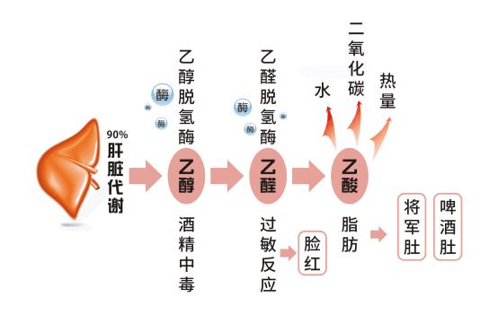 日本保肝解酒什么原理_酒喝多了用什么解酒