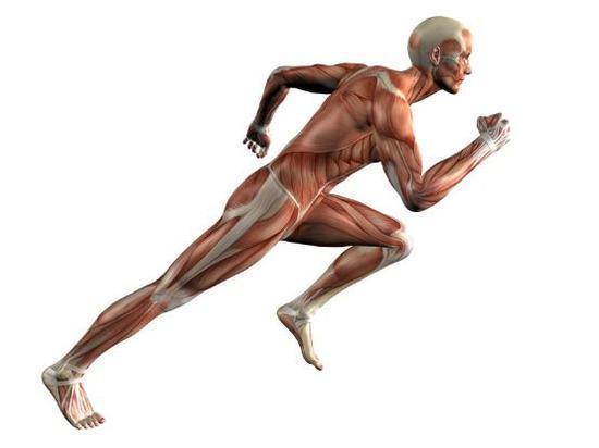 大众跑者跑步没有最好最佳 只有更合理更科学!