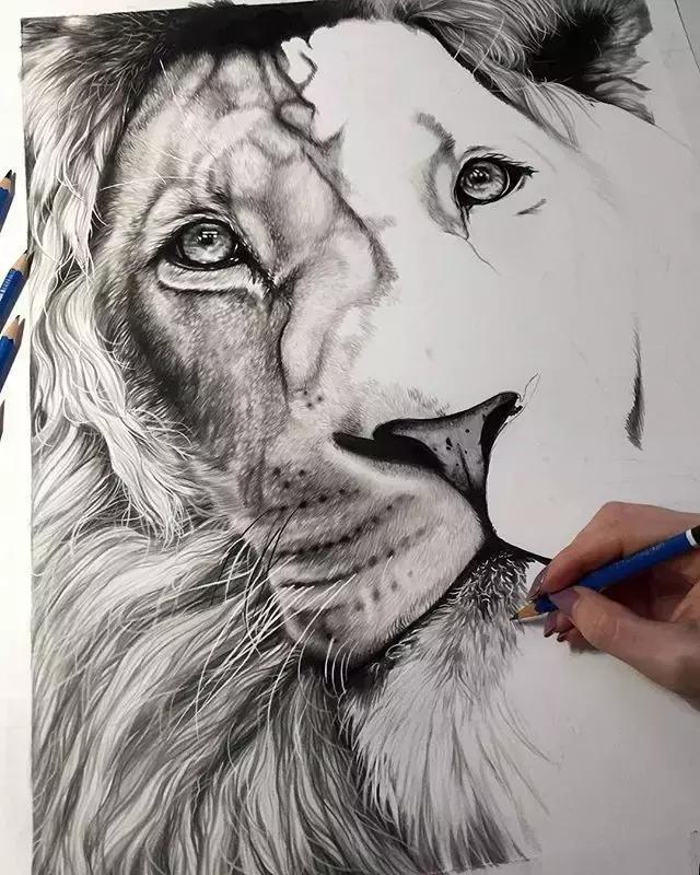 彩铅樱桃 素描玫瑰 铅笔下的猫咪 眼睛像蓝宝石 bling bling~ 彩铅下