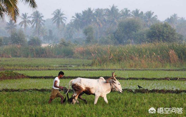 印度人均粮食消费量_印度人均年收入