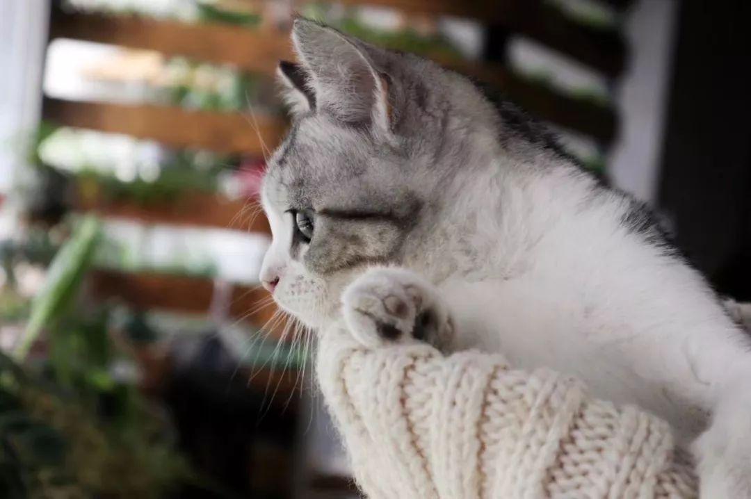 长寿花对猫有毒吗图片