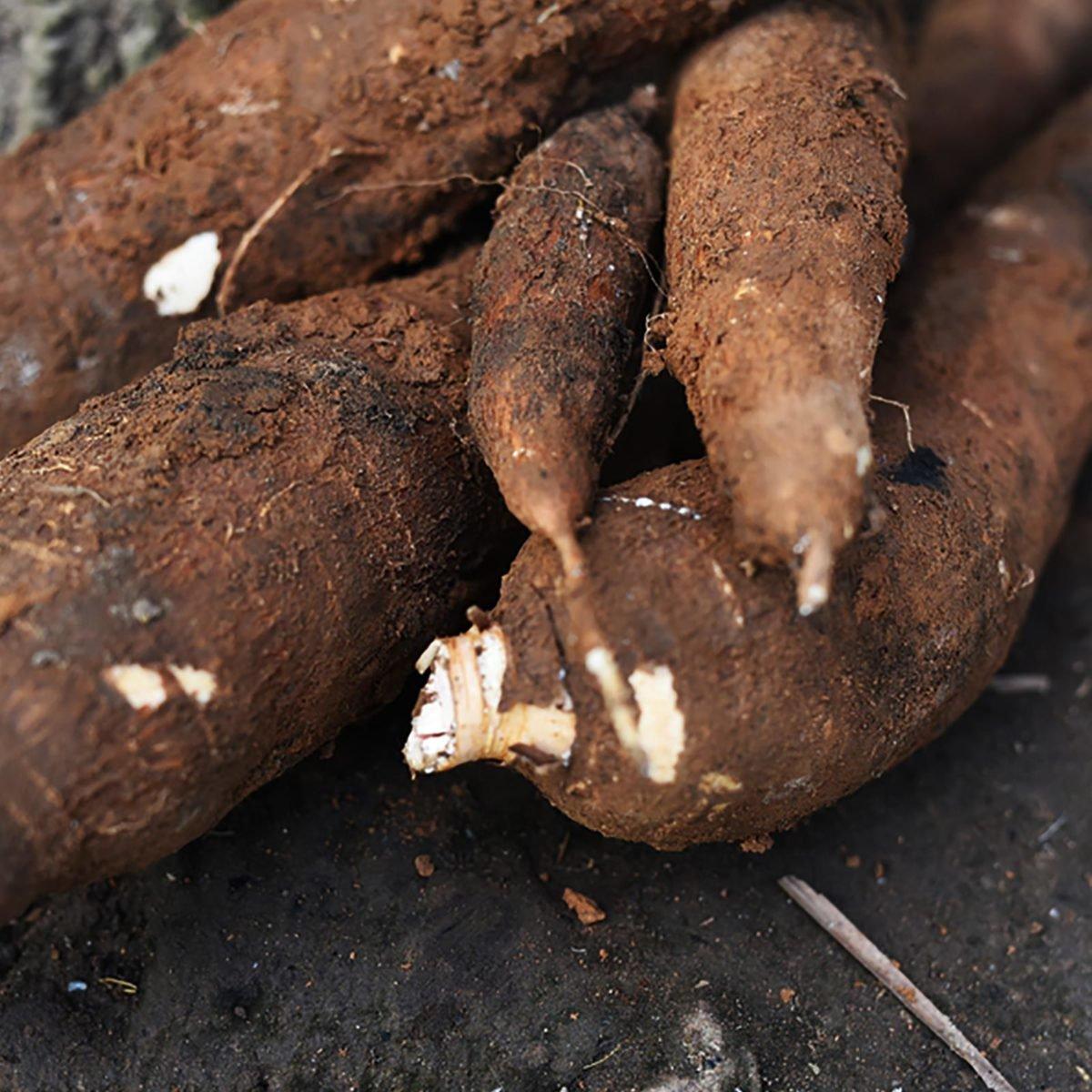 血但不痛_但苦杏仁就不痛了,它里面含有氢氰酸,只需要大约70颗生苦杏仁就能杀死